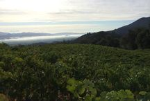 Harvest 2014 / Long Meadow Ranch Winery harvest 2014 / by Farmstead at Long Meadow Ranch