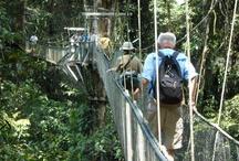 Borneo / by ElderTreks
