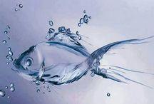Wonders of Water / All things Water Wonders / by Glasstic Bottle