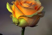 send me flowers / by Dee Dee Neal