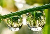 Be : Dew drops / Bubbles / by Mondayasu