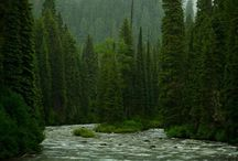 My childhood memory...a river runs through it. / by Jason Tacbas