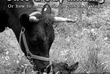 Family Cow / by Christin Tombolini