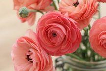 Flowers / by JuiceARollOfCandy