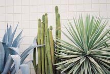Exteriors + Outdoors + Pools / by Meg Biram