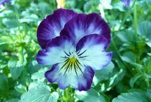 Flower colors / by Jan Ostlund