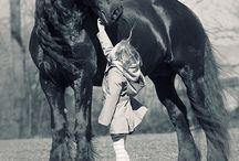Horse / by Montse Perez Jimenez