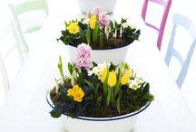 Spring / by Morgan Crampton