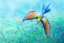 Birds / by Kri Gandzumian