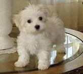 Puppy Style / by Stacy (Merowitz) Weinstein