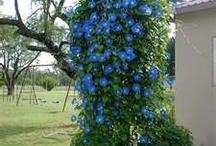 Beautiful gardens / by Pat Cramer Kennedy