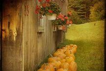 I Love Fall/Autumn / by Judy ♥ daily yarns
