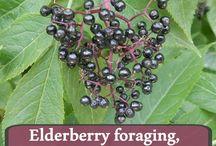 Foraging...eating Mother Natures food. / by Elizabeth Hoskinson