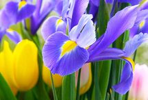Flowers / by Jennifer Cain
