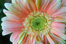 Flower Power... / by Kathy Bradfield-Phillips