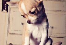 Just Cute!!! / by Jessica Puakalehua Johnson