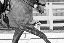 Horses / by Claudia Katharina