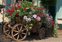 Flowers and Bikes Trikes Wagoons and Wheelbarrows / by Helena Znidaric