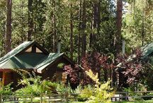 Quiet Creek Inn, Idyllwild California / All of these photo in this album were taken on our grounds. We have over 6 acres with private creek frontage and hiking. / by Quiet Creek Inn