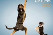 Pet Fitness | ARKlady / #pet #fitness ideas and products. / by ARKlady