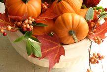 Pumpkin  / by Ruth