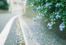 Picturesque / by Tina Rose