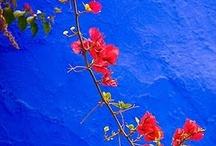 gardens / by gabriela olate
