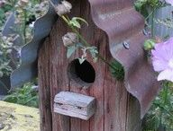 Bird Houses / by Holly Vadney Smith