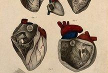 Corazón, donde estas corazón? / by Francisco Estrada