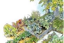 Vegetable garden / by Katie Alleman