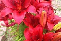 Flowers & Butterflies / by Sandra Vargas