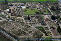 Urban Tree Farm Nursery  / We would like to share a few photos of our nursery; spanning over 20 acres, we are the largest retail nursery in northern California. / by Urban Tree Farm Nursery