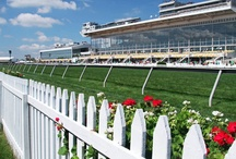 136th Preakness Stakes / by Preakness Stakes