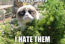 Grumpy & snoopy cat / by tina hofschild