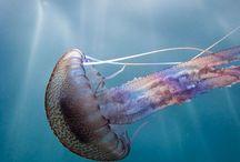 Sea Creatures / by Linda Soule