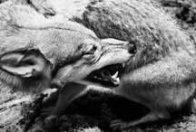 Animals / by Stephanie Kern