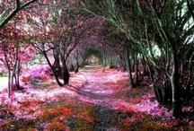 Pretty Paths, Roads, Highways / stairs, bridges, village walkways / by Carol Garner