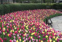 Mother's Day 2014 / by Central Park Conservancy
