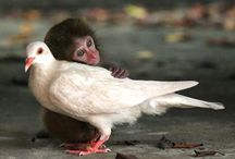 opposites attract  / cute animals  / by Grandma of an Angel