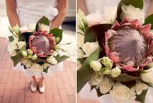 Weddings from Sunny South Africa / by Thea Rossouw