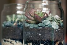 My Plants / by Annelle Pastel Salcido