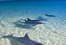 Love my dolphins ..... / by Arran Nailor