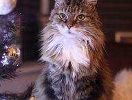 Kitties!!! / by Kim Masko-Hendges