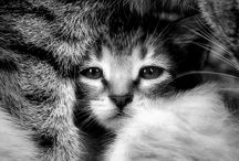 cats >^.^< / by Jennifer Stone