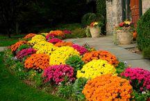 Backyard/garden / by Jessica Carson