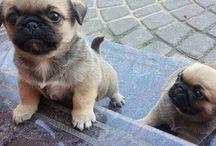 I want a pug! / by Vanesia P