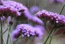 Garden Flowers / by BigDaddyKlein