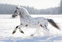 If Wishes were Horses... / A colletion of pictures that are beautifully equine. / by Amanda Lee