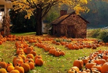 Fall/Halloween / fall stuff / by Leslie Rozum