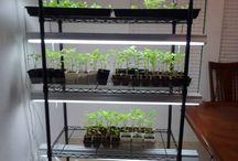 Growing my own garden plants / by Laurie Weiss Kohlschmidt